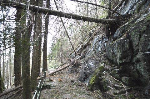 Slik så Hestebergveien ut etter at stormen «Nina» hadde herjet.
