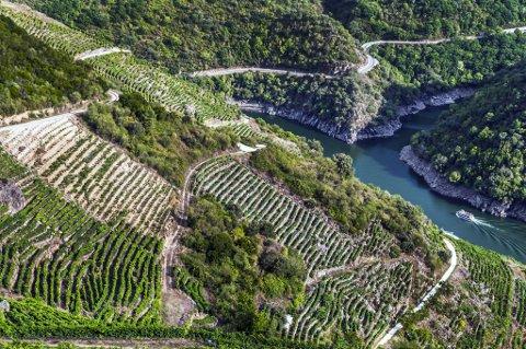 Landskapet i Ribeira Sacra er bratt og spektakulært der vinmarkene «henger» høyt over elven. Her lager de flotte rødviner av Mencia-druen, som mange mener er blant de mest spennende i Spania.