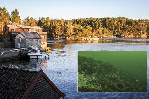 Dekkforurensing: I Hjelmåsvågen ligger det flere titusen, kanskje over 100.000, bildekk og deler av dekk. foto: Julie Sætre, NORDHORDLAND/morten Klementsen