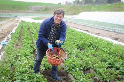 Frister: Helge Todnem liker å være blant de første til å ta opp poteter. I år er de på Frøvoll gård enda tidligere enn vanlig med å høste allerede 12. mai.