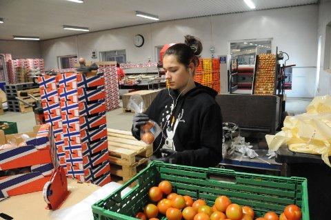 Tomatpakking: Patrycja Wilk er blant dem som var på jobb i det ombygde pakkeriet denne uka.