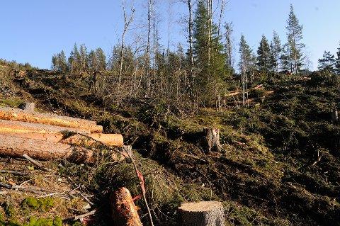 KLAGET: Naturvernforbundet etterlyser skriftlig svar på klage de har sendt inn på denne hogsten.