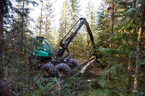 MER FRA SKOGEN: «Vi ønsker at verdiskapningen fra skogen skal øke», skriver Rebecca Borsch, stortingskandidat for Buskerud Venstre.