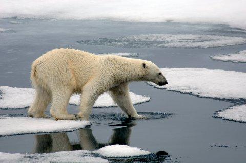"""BEKYMRET: """"... det er skremmende hvor fort isen forsvinner i Arktis"""", skriver Arne Nævra."""