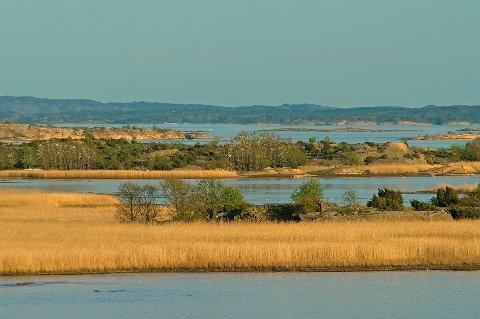 Fugleeldorado: Tårnet på Øra gir oversikt over store våtmarksområder. Nå mener MDG det er på tide å grave frem igjen dammer som har blitt gjenfylt og utradert.