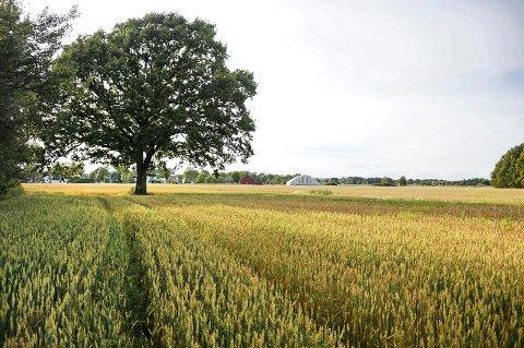 Serie om bærekraft: Gjennom sommeren setter Fredriksstad Blad sju av FNs bærekraftsmål under lupen.