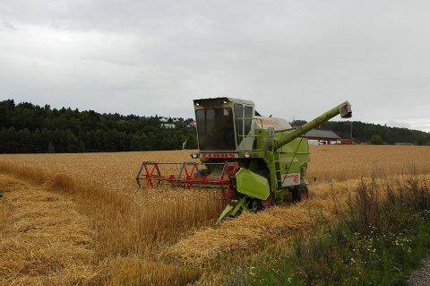 LABER RESPONS: Det er svært få av de som har søkt om å leie landbruksjord de neste ti årene som er interessert i å legge om til økologisk drift.