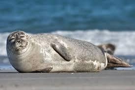 TORSK: Selen er for glad i torsk, og den lever derfor farlig denne vinteren.