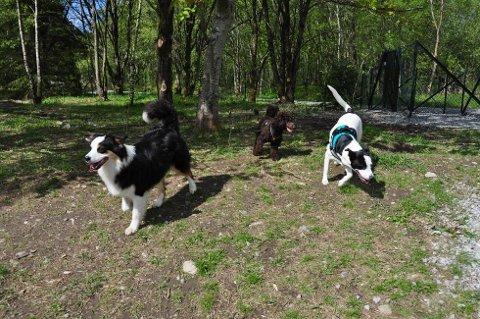 Hundene ser ut til å stortrives i den nye hundeparken på Varatun.