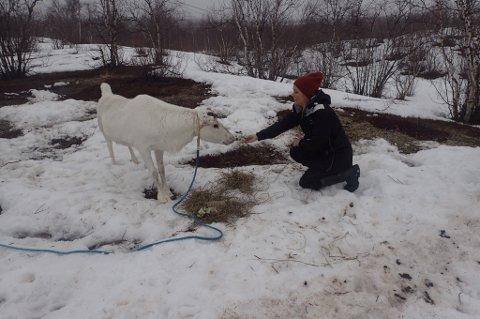 Kautokeino bød blant annet på joik og reinsdyr.