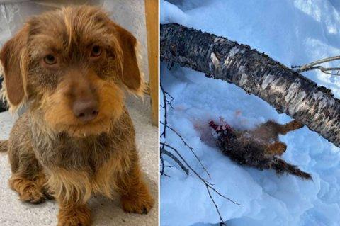TATT: Hundeeier Knut Arne Silkoset fryktet det verste da Stella ble borte.