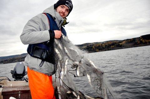 Ivrig lågåsildfisker: Espen Haugen Dalbak trekker opp garnlenken med glinsende lågåsild. Foto: Dagfinn Hovland