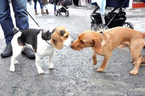 HUNDETREFF: I en hundeluftepark kan hundene hilse på hverandre uten bånd.