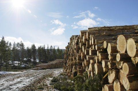ELVERUM: Skoghovedstaden er og blir Elverum, skriver innsenderne.