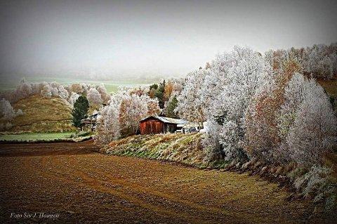 KALDE TRÆR: Høstfrost på Dovre. Foto: Siv J. Haugen