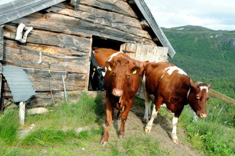 ÅPEN GÅRD PÅ NETT: Vis fram livet på gården, oppfordrer Norges Bondelag. Illustrasjonsfoto