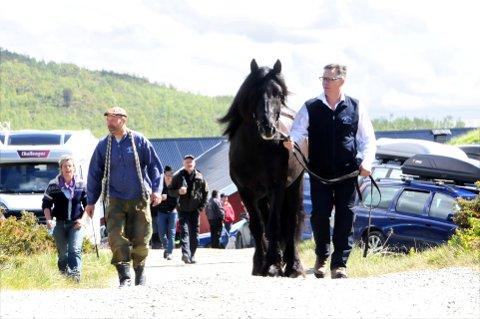 DET 149. SLIPPET: – Dette er stor stas, innrømmer Frode Myrvang fra Ringebu. I kvitskjorte på Dølahestens festdag fulgte han treåringen «Stensliguten» til de ti hoppene som ventet i Prinsehamna. Myrvang var 15 år gammel første gangen han fikk være med å hjelpe til under et fjellslipp. Neste år kan hesteavlssenteret i Sikkilsdalen feire 150 års jubileum. Foto: Vidar Heitkøtter