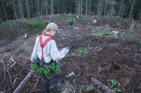 Miljøvernere som kjemper imot bruk av skogressursene bidrar indirekte til å opprettholde etterspørselen etter fossile ressurser, skriver Arne Ivar Sletnes.