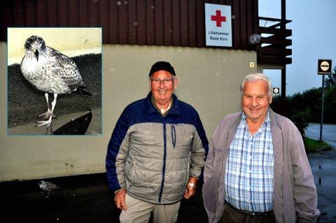PIP-PIP: Johnny Dalbakk og Kåre Bråten mater fuglen som forhåpentligvis snart er på vingene igjen. Foto: I. Aa Schinstad