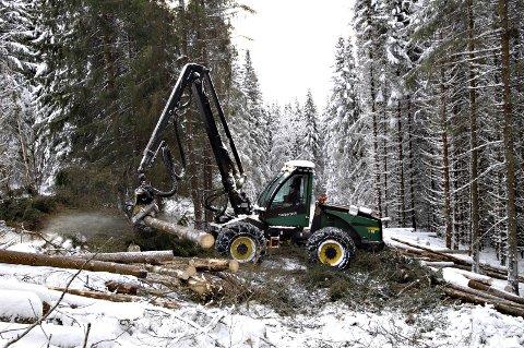 Fusjon: - Mener ledelsen i dagens Mjøsen at de gjennomfører en god prosess og sørger for en forankring og legitimitet som er et skogsamvirke verdig? Foto: Torbjørn Olsen