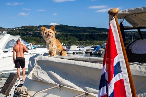 Hunden Mia er maskot i båten.