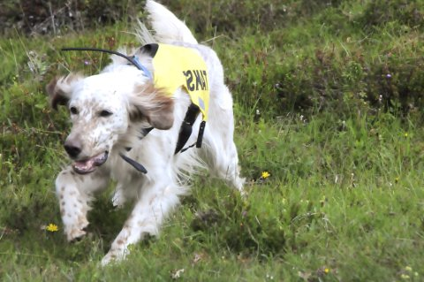 STOPP: Jakthundeiere får ikke slippe hundene sine i treningsfeltet på Dovrefjell før 1. august.