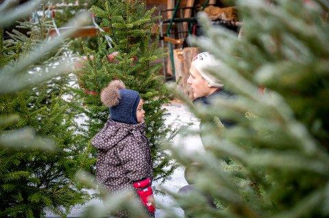Far David Lande Sundall og datteren Signe (2 år) var ute lille juleaften for å kjøpe juletre.