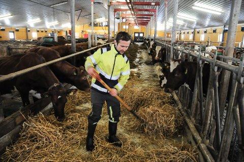 IKKE PÅ GREIP: Øyvind Leine Thune trenger greipa til å fore dyra sine. Men Klimakur 2030 henger ikke på greip, etter hans mening.