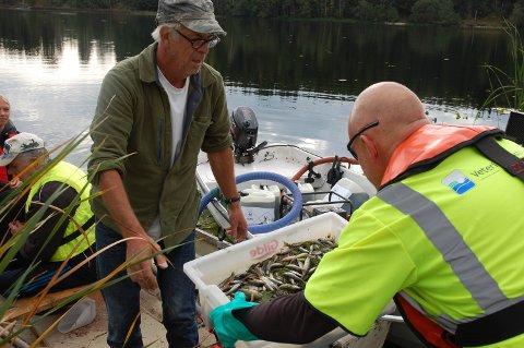 DØD FISK: Oddvar Staxrud leverer første kasse med død fisk etter rotenonbehandling onsdag.
