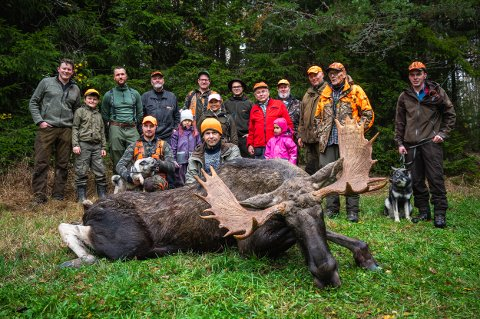 ELGOKSE: Sørli jaktlag kunne slippe jubelen løs da denne elgoksen på 273 kilo ble skutt søndag.