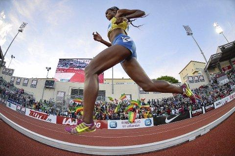 På indre bane: Mens friidrettsstjernene jaktet på verdensrekorder under årets Bislett Games, ble de selv jaktet på av Bjørn Johannessen utstyrt med fotoapparat. Her er det etiopiske Genzebe Dibaba som blir heiet fram til seier på 5000 m av sine entusiastiske landsmenn med flagg på tribunene.