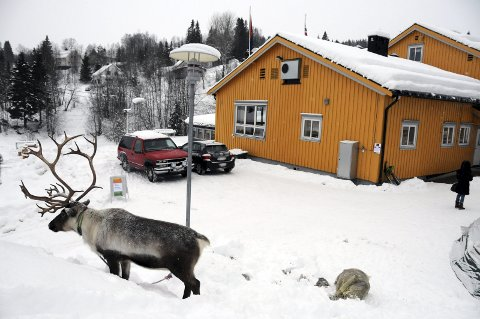 LANG KAMP: Sameskolen som ligger i Hattfjelldal sentrum skal være statlig.  Foto: Tor Martin Leines Nordaas
