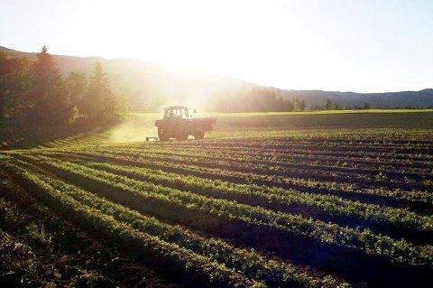 Kandidater: Det ønskes flere nominasjoner fra Nordland til Årets unge bonde 2016.