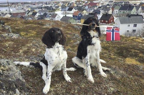 Savnet: Bajas og Ask forsvant fra Bønå i Vevelstad søndag morgen. De kan ha dratt over fjellet til Mosjøen/Eiterådalen/Hundåla. Foto: privat