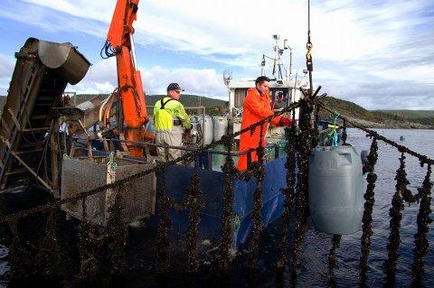 Norgeskjell er Norges største prdusent av blåskjell, har har dyrkningsanlegg i Sandnessjøen, Leirfjord og Brønnøysund. De omsetter årlig for 20 millioner kroner.