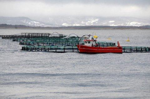 Fylkesmannen i Nordland var hyppigst på besøk hos akvakulturvirksomheter i fjor.