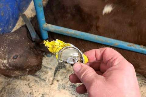 LIVSFARLIG: Det har vært flere saker om den dødelige effekten aluminiumsbokser kan ha på kyrne de siste årene.