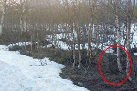 UVERDIG: Her står gravsteinen til en liten pike som døde på 70-tallet - 55 mil unna gravstedet på Sortland.