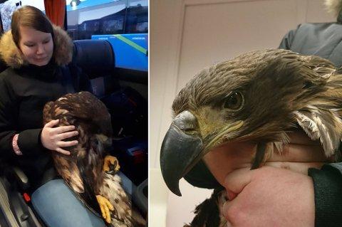 ØRNULF ELLER ØRNHILD: Ørnen fikk eventuelle navn i løpet av bussturen, på Mette Synnøves fang.