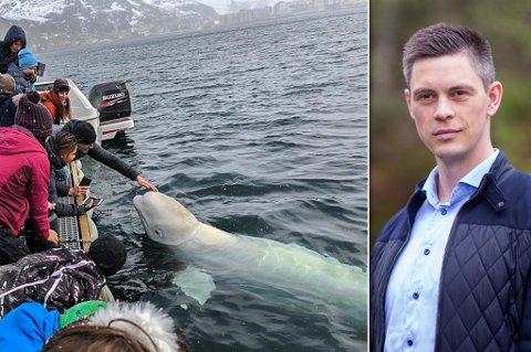 OBSERVERES: Fiskeridirektoratet holder øye med hvalen, og ser om den klarer seg selv, inntil videre, forteller kommunikasjonsrådgiver Vegard Oen Hatten. Som du kan se av bildet, får hvalen fort et publikum.