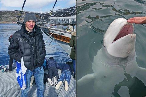 HVALFARTET FOR Å SE HVALEN: Vassili Baidala var på tur hjem til Vardø, men måtte snu og kjøre til Hammerfest da han hørte om hvithvalen. Her ser du at hvalen lar ham klappe den. Du ser også mengden av skuelysne som har samlet seg på kaia.