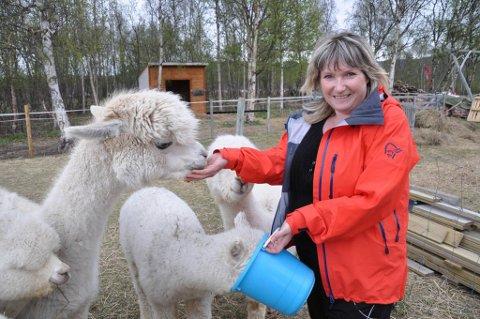 VIRKSOMHET: Eva Paulsen har alpakkaer, og ulla deres blir sendt til spinning og garnlaging.