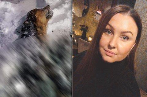 HÅPER DET ANMELDES: - Jeg håper eierne anmelder det, og at den skyldige blir tatt, sier Katrine Larsen om hendelsen.