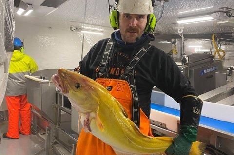 PÅSKETORSK: Tom-Andre Øvergård fikk sjelden fangst i nota om bord på fiskebåten Hovden Viking.