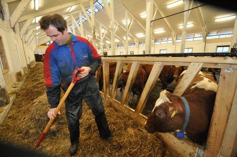 MULIG TOPPÅR: Nå mobiliserer melkeprodusentene, det gjelder også 150 medlemmer i Levanger og Frostaprodusentlag. Leder Torbjørn Støre (bildet) på Støre gård i Skogn antyder at 2021 kan bli ett av de bedre årene for melkebønder.