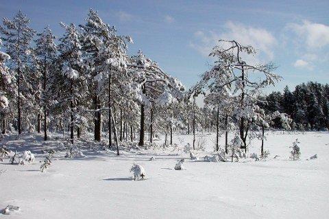 Midtfjellmosen naturreservat har åtte grunneiere. Området er et av flere skogområder i Aurskog-Høland som er vernet.