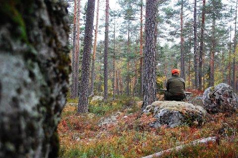 KOMMER'N SNART?T: For mange er elgjakta et av årets store høydepunkter. Fredag er det klart for årets jakt som blant annet innebærer mange timer på post, ventende på skogens konge i høstfarget skog.