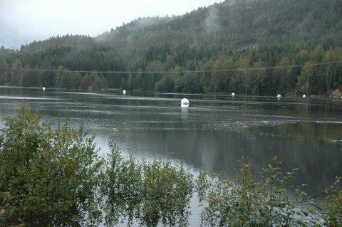 VANNVEIEN: Rundt 20 rundballer tok vannveien etter at elva mellom Nåsvannet og Åkrevannet gikk langt over sine bredder.