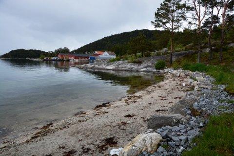 Husnes Vekst vil rydda badestranda Borvika.