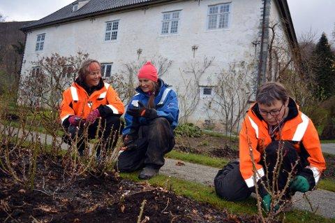 Gartnarane Christine Dekke (t.v), Ellen Blytt og Kari Opedal frå arbeidet i rosehagen ved eit tidelgare år.